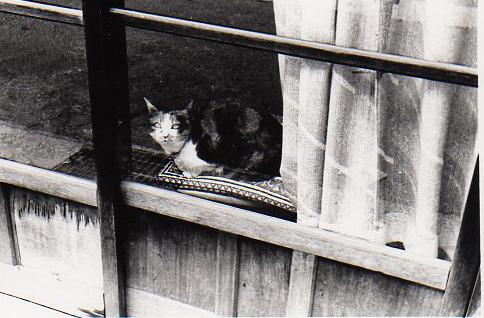 25猫img254.jpg