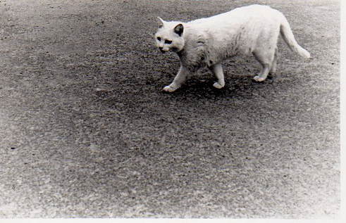 25猫img256.jpg