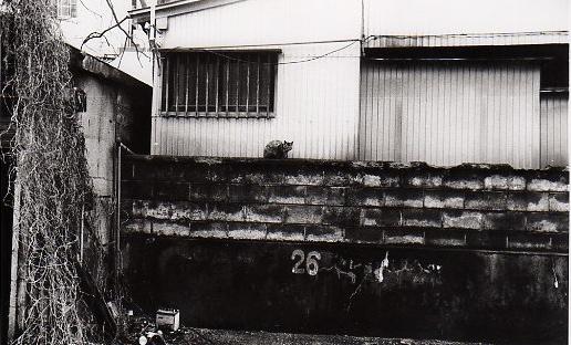 26猫img258.jpg