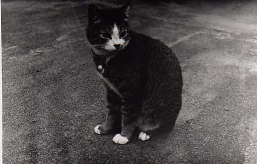 27猫img257.jpg